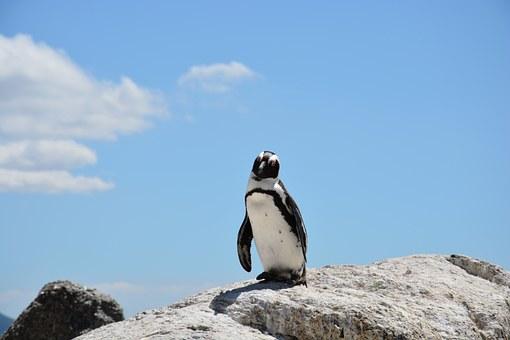 penguin-657527__340
